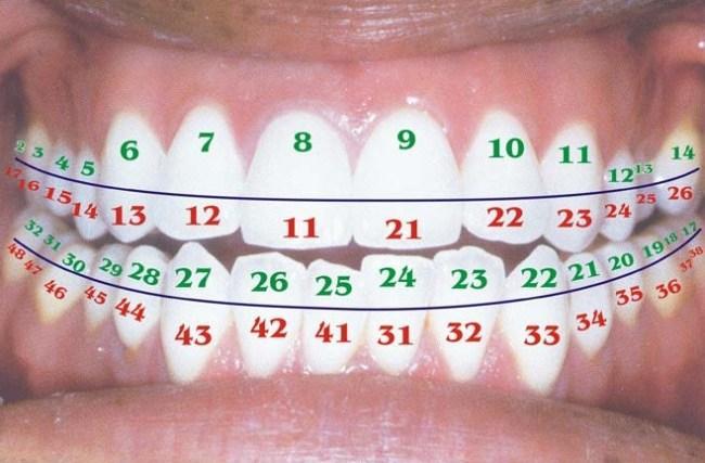 Какая существует последовательность записи зубов в квадрантах формулы
